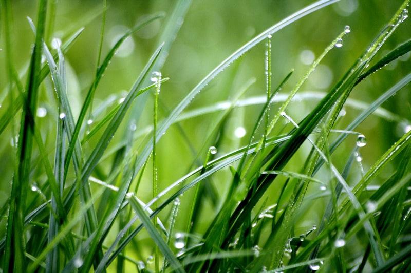 lawn care services rain