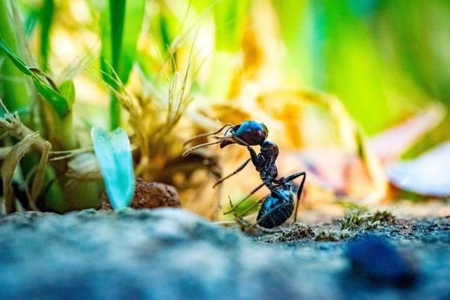 pest control service ant