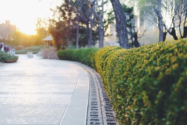 shrub maintenance sidewalk